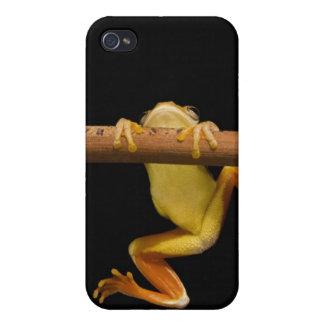 Rana del pantano (Limnonectes Leytensis) iPhone 4/4S Funda