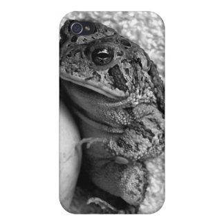 Rana del sapo que sostiene la fotografía de la per iPhone 4 protectores