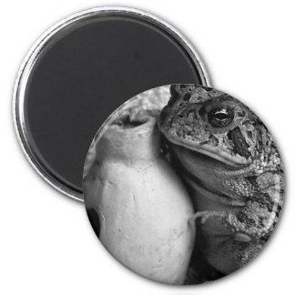 Rana del sapo que sostiene la fotografía de la per iman para frigorífico