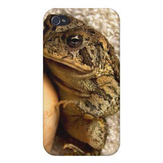 Rana del sapo que sostiene la fotografía miniatura iPhone 4 protectores