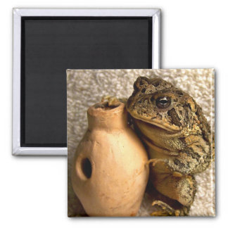 Rana del sapo que sostiene la fotografía miniatura iman de nevera