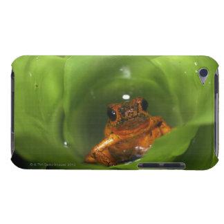 Rana del veneno de la fresa que oculta en hojas Case-Mate iPod touch protectores