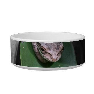 Rana en el bw verde de la hoja tazón para agua para gatos