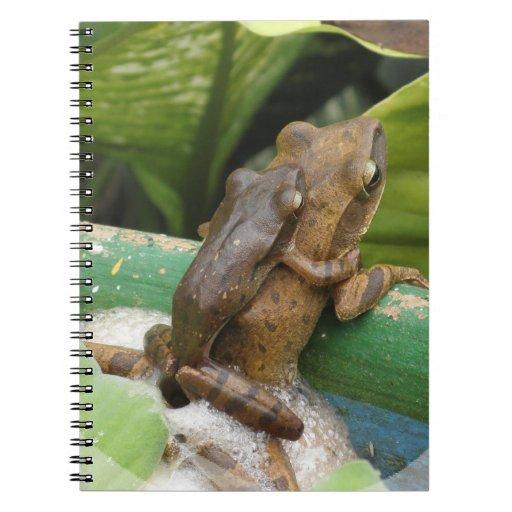 Rana en el cuaderno trasero