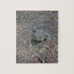 Rana en el piso del bosque rompecabeza con fotos