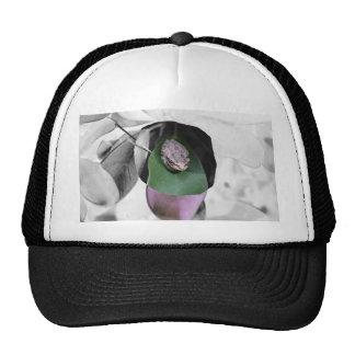 Rana en el recorte del bw de la hoja del verde del gorras de camionero