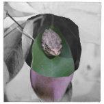 Rana en el recorte del bw de la hoja del verde del servilletas imprimidas