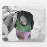 Rana en el recorte del bw de la hoja del verde del alfombrillas de ratones
