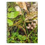 Rana en la hierba libros de apuntes con espiral