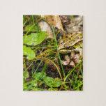 Rana en la hierba puzzle con fotos