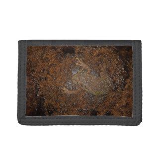rana en mirada grabada en relieve musgo