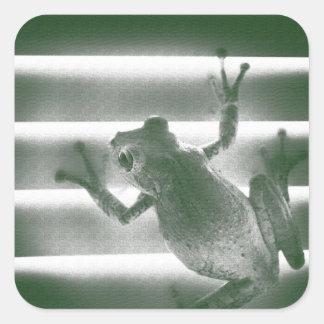 rana en reptil anfibio fresco del bosquejo verde calcomanía cuadrada