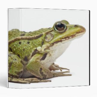 Rana europea común o rana comestible
