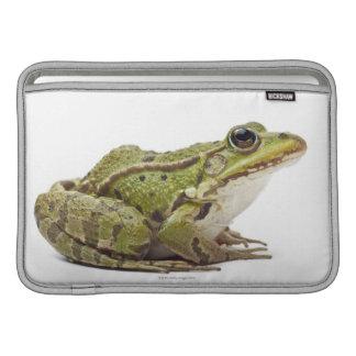 Rana europea común o rana comestible funda  MacBook