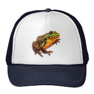 Rana grande de la rana mugidora grande con actitud gorra