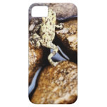 Rana iPhone 5 Case-Mate Fundas