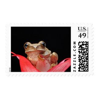 Rana linda, divertida que se sostiene sobre un sellos postales