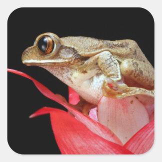 Rana linda en los pegatinas rojos de la foto de la pegatina cuadrada