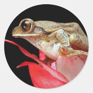Rana linda en los pegatinas rojos de la foto de la pegatina redonda