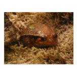rana, marrón postal