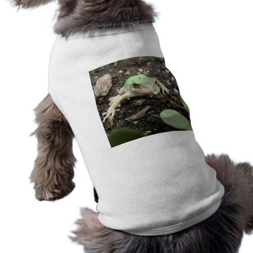 Rana minúscula ropa de perro
