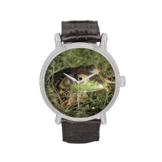 Rana mugidora americana reloj