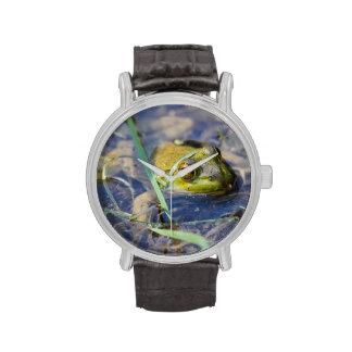Rana mugidora americana relojes de pulsera