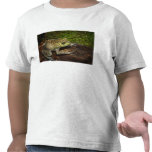 Rana mugidora, catesbeiana del Rana Camiseta