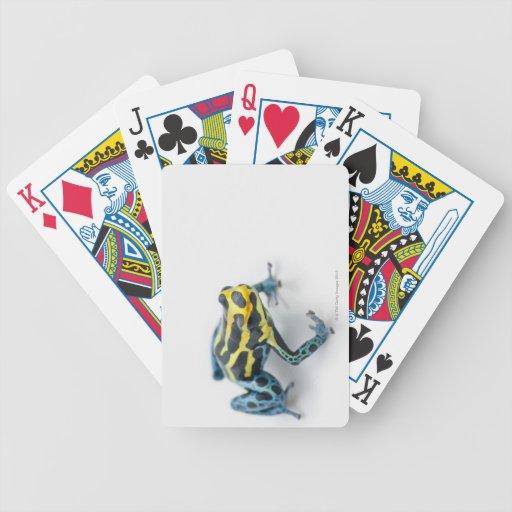 Rana negra, amarilla y azul del dardo del veneno baraja de cartas