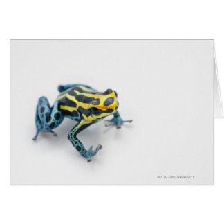 Rana negra, amarilla y azul del dardo del veneno tarjeton
