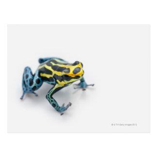 Rana negra, amarilla y azul del dardo del veneno postal