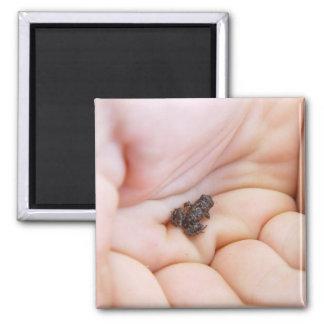 Rana negra muy minúscula sobre el tamaño de la mos imán cuadrado