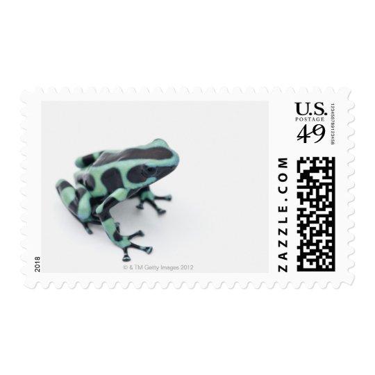 rana negra y verde del dardo del veneno sellos postales