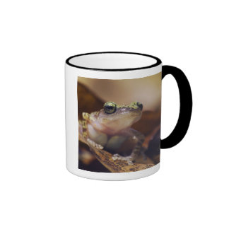 Rana que gojea del acantilado Eleutherodactylus Taza De Café