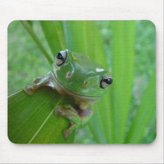 Rana sincera verde linda en la licencia tapete de ratón