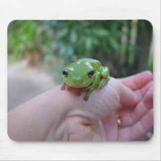 Rana sincera verde linda en la mano alfombrilla de ratones