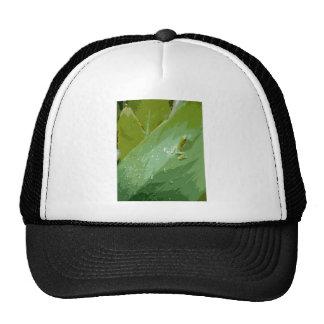 Rana verde Bejeweled Gorra