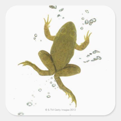 rana verde común colcomanias cuadradass