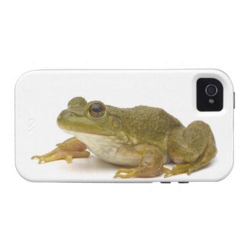 Rana verde común funda iPhone 4