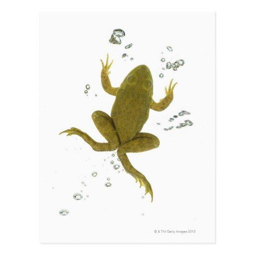 rana verde común tarjeta postal