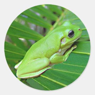 Rana verde en los pegatinas de hoja de palma pegatina redonda