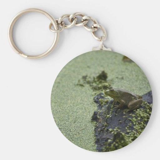 Rana verde llaveros personalizados