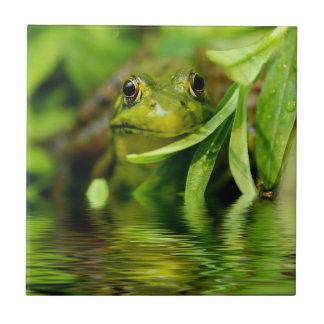 Rana verde por una charca azulejo cuadrado pequeño