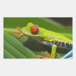 Rana verde rectangular pegatina