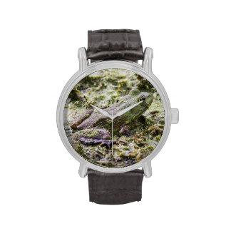 Rana verde relojes de mano