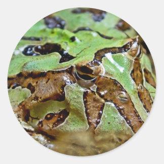 Rana verde y marrón del modelo pegatina redonda
