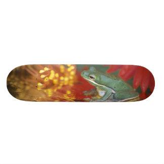 Rana y reflexiones entre las flores. Crédito como: Skateboard