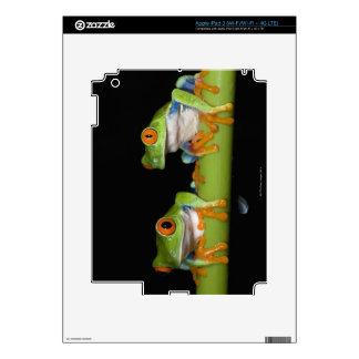 ranas arbóreas Rojo-observadas (callidryas de iPad 3 Skins