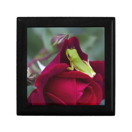 Ranas arbóreas verdes y rosas rojos cajas de joyas