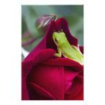 Ranas arbóreas verdes y rosas rojos papelería de diseño